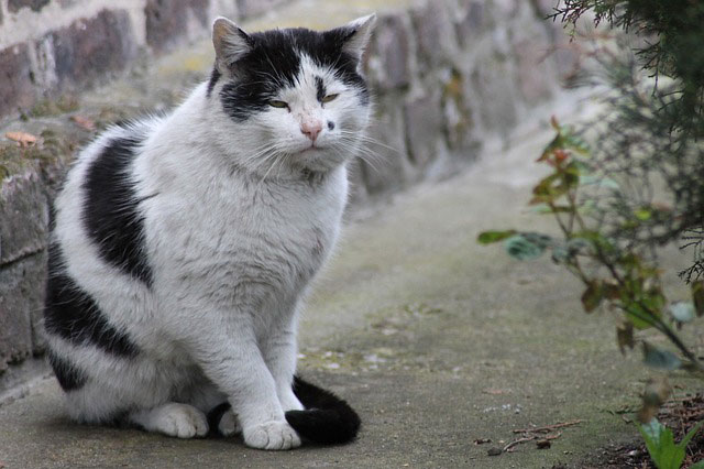 cat-321956_640.jpg