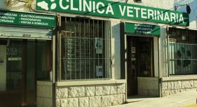 Vocación y profesión en Hoyo: Montse Basquero
