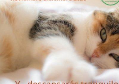 Campaña de esterilización felina